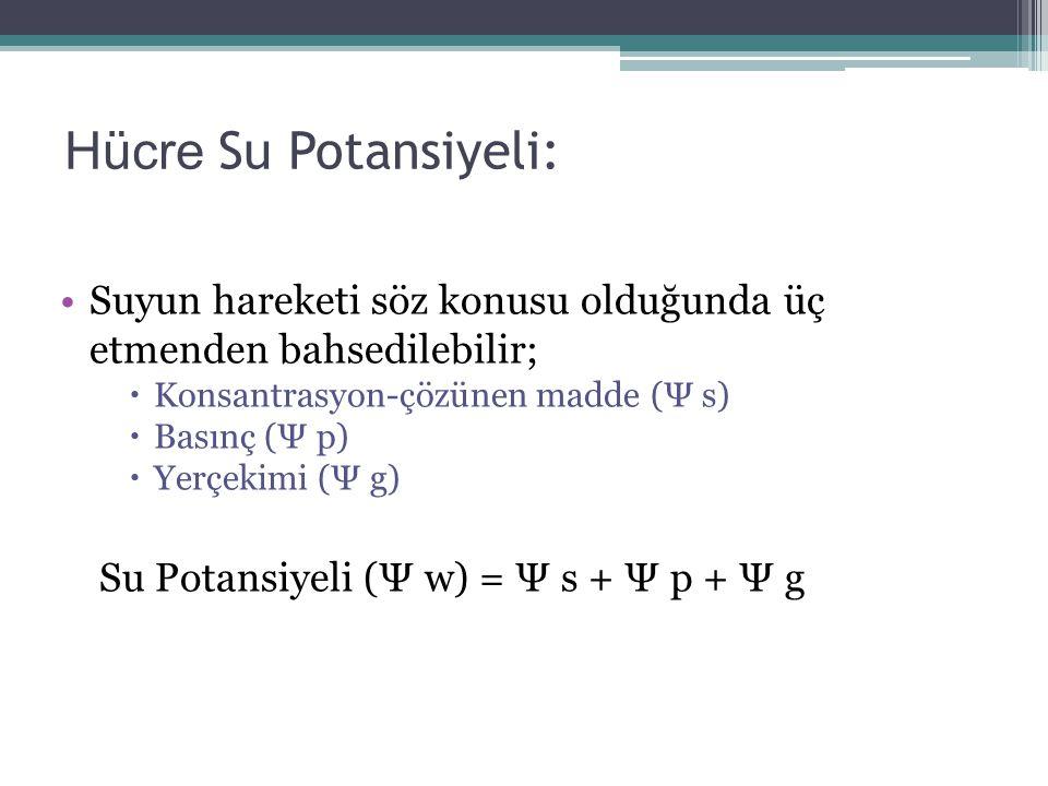 Hücre Su Potansiyeli: Suyun hareketi söz konusu olduğunda üç etmenden bahsedilebilir;  Konsantrasyon-çözünen madde (Ψ s)  Basınç (Ψ p)  Yerçekimi (