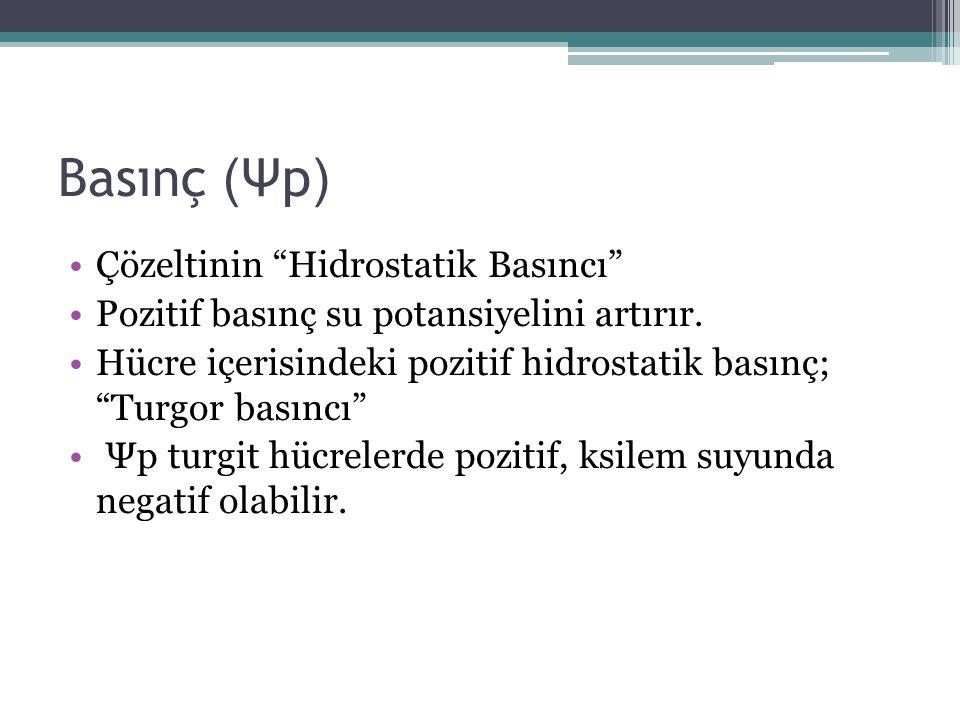 """Basınç ( Ψp ) Çözeltinin """"Hidrostatik Basıncı"""" Pozitif basınç su potansiyelini artırır. Hücre içerisindeki pozitif hidrostatik basınç; """"Turgor basıncı"""