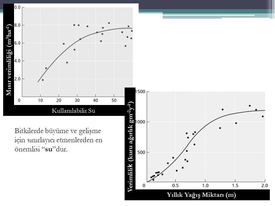 Basınç ( Ψp ) Çözeltinin Hidrostatik Basıncı Pozitif basınç su potansiyelini artırır.