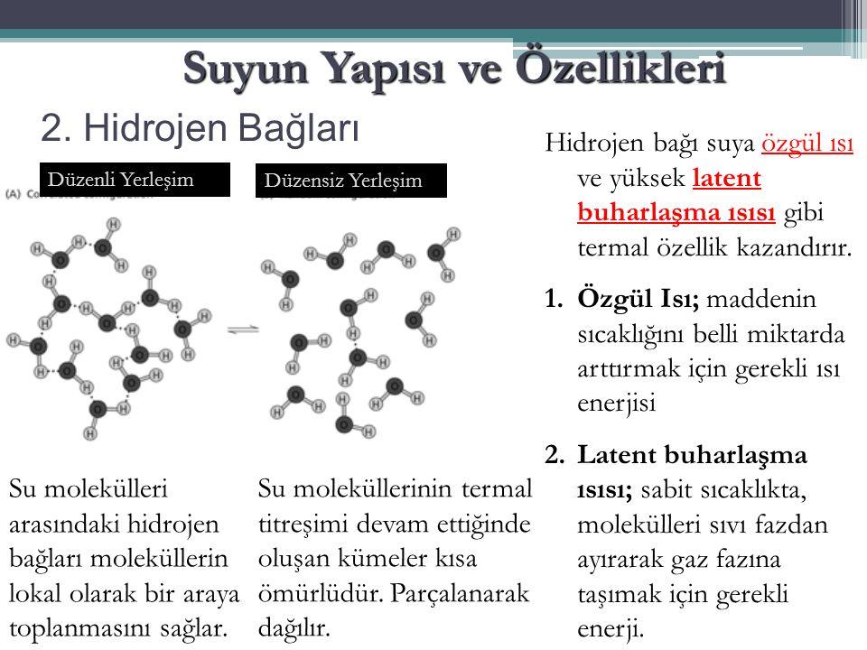 2. Hidrojen Bağları Suyun Yapısı ve Özellikleri Düzenli Yerleşim Düzensiz Yerleşim Su molekülleri arasındaki hidrojen bağları moleküllerin lokal olara