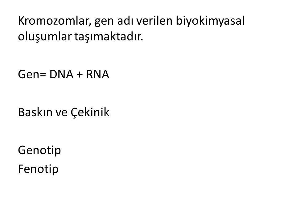 Kromozomlar, gen adı verilen biyokimyasal oluşumlar taşımaktadır. Gen= DNA + RNA Baskın ve Çekinik Genotip Fenotip