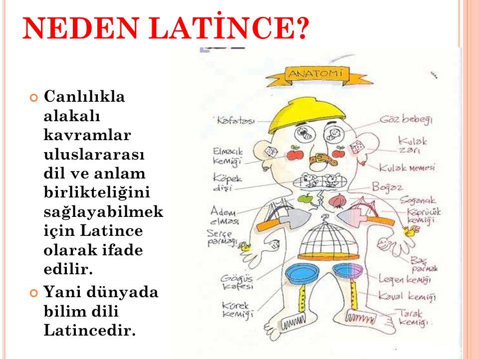 NEDEN LATİNCE? Canlılıkla alakalı kavramlar uluslararası dil ve anlam birlikteliğini sağlayabilmek için Latince olarak ifade edilir. Yani dünyada bili