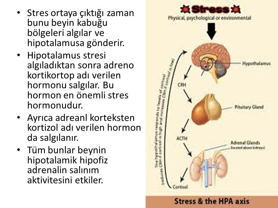 Stres ortaya çıktığı zaman bunu beyin kabuğu bölgeleri algılar ve hipotalamusa gönderir. Hipotalamus stresi algıladıktan sonra adreno kortikortop adı