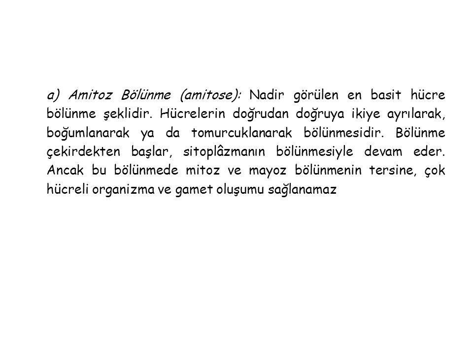 a) Amitoz Bölünme (amitose): Nadir görülen en basit hücre bölünme şeklidir.