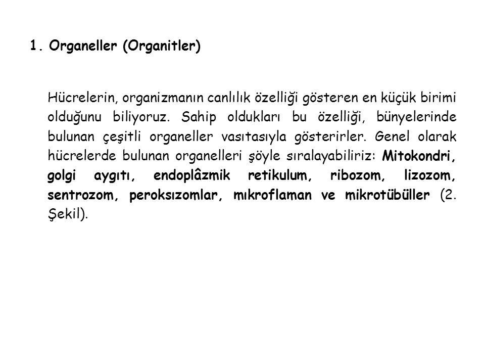 1. Organeller (Organitler) Hücrelerin, organizmanın canlılık özelliği gösteren en küçük birimi olduğunu biliyoruz. Sahip oldukları bu özelliği, bünyel