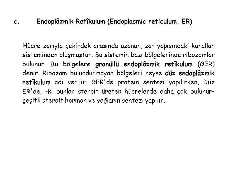 c.Endoplâzmik Retîkulum (Endoplasmic reticulum, ER) Hücre zarıyla çekirdek arasında uzanan, zar yapısındaki kanallar sisteminden oluşmuştur.