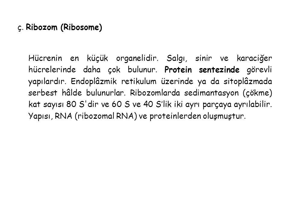 ç.Ribozom (Ribosome) Hücrenin en küçük organelidir.