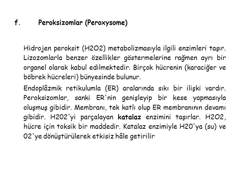 f.Peroksizomlar (Peroxysome) Hidrojen peroksit (H2O2) metabolizmasıyla ilgili enzimleri taşır.