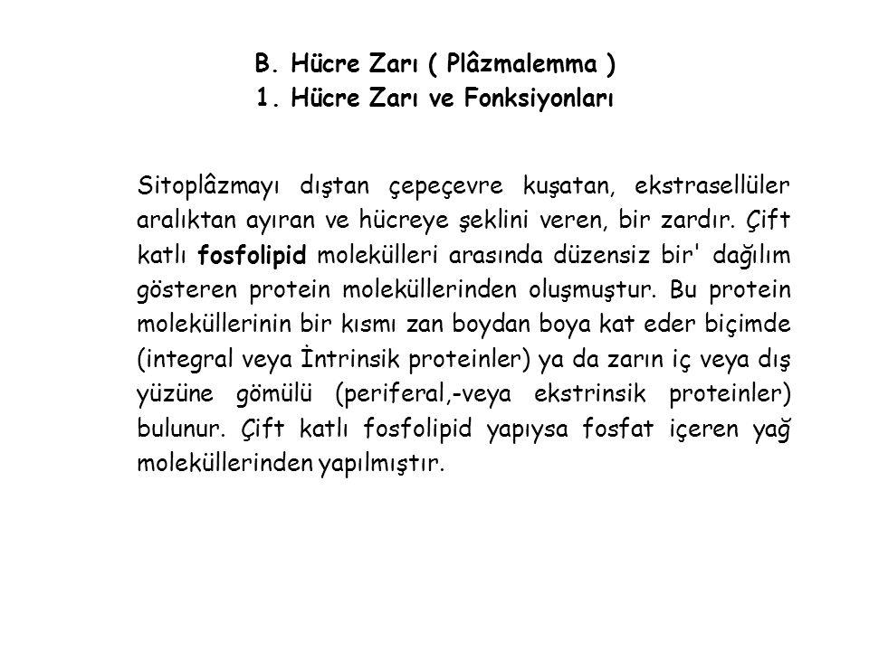 B.Hücre Zarı ( Plâzmalemma ) 1.