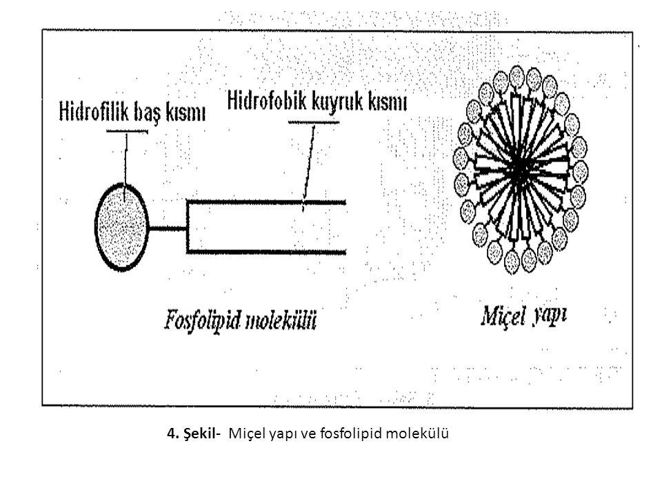 4. Şekil- Miçel yapı ve fosfolipid molekülü