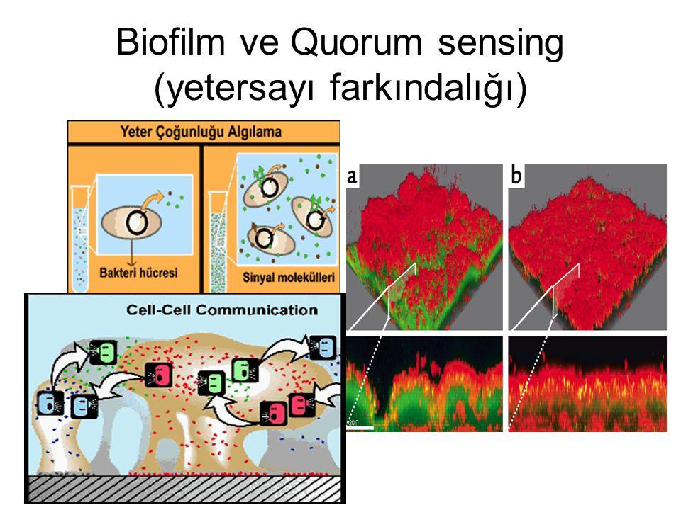 Biofilm ve Quorum sensing (yetersayı farkındalığı)