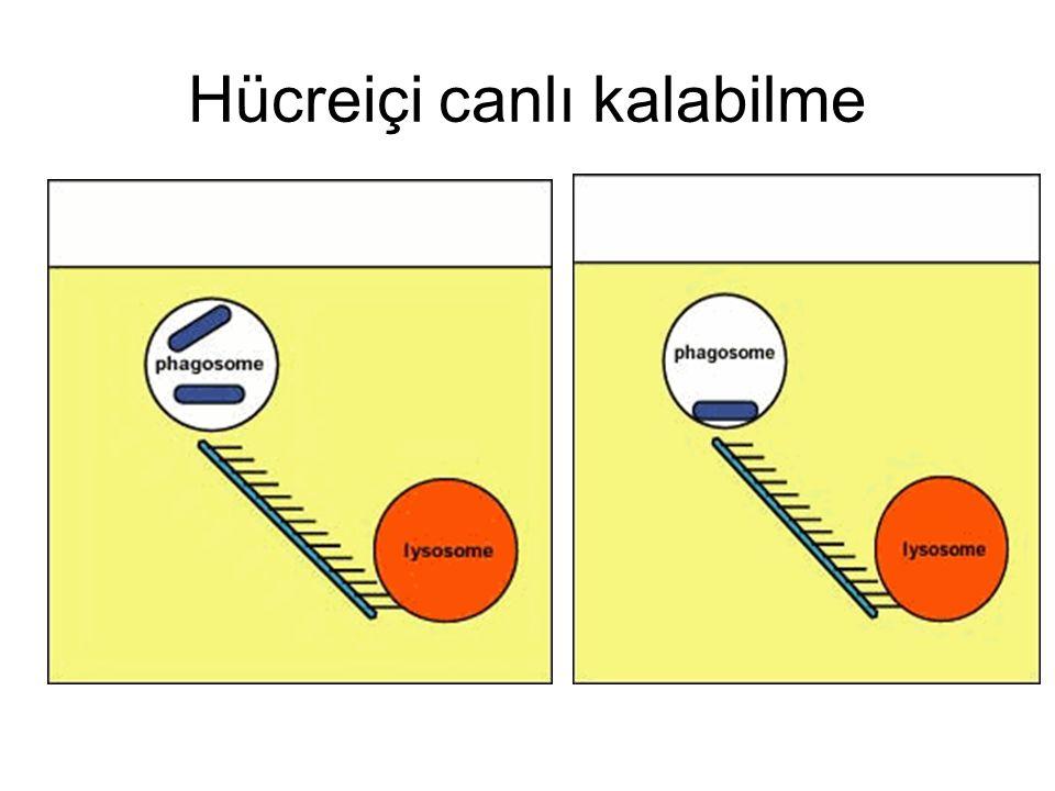 Hücreiçi canlı kalabilme