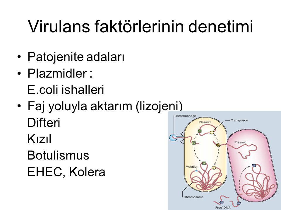 Virulans faktörlerinin denetimi Patojenite adaları Plazmidler : E.coli ishalleri Faj yoluyla aktarım (lizojeni) Difteri Kızıl Botulismus EHEC, Kolera