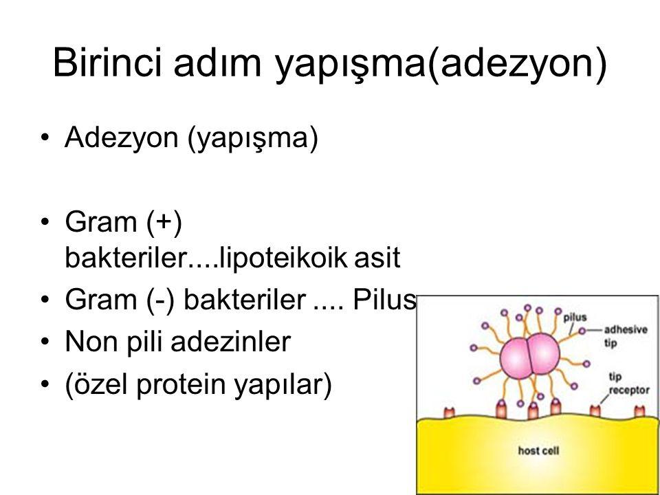 Hücre yüzeyine yapışma Glikokaliks ve biofilm slime faktör Yabancı yüzeylere yapışma Korunma (antibiyotik, immun sistem) S.epidermidis.yabancı cisim inf S.mutans..Diş çürüğü