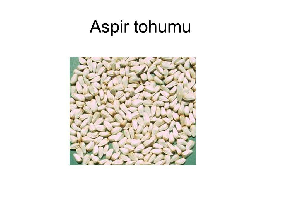 Sanayide İşlenmesi: Aspir yağlık bir ürün olduğu için, sanayide yağ elde etmek üzere değerlendirilir.