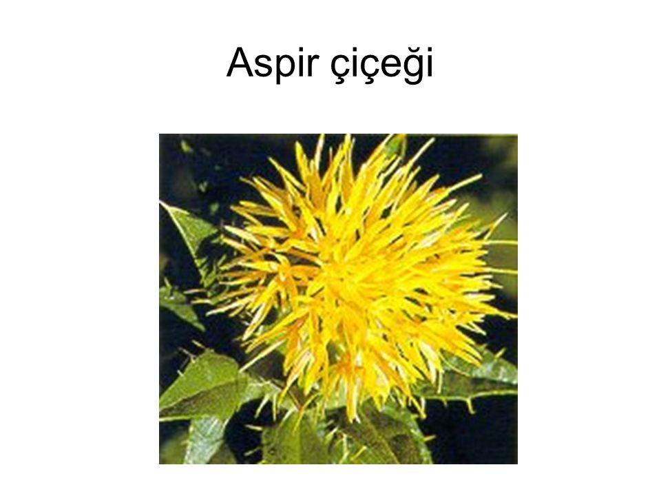 Aspir çiçeği