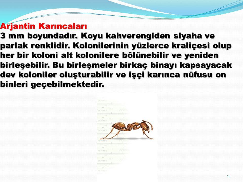 Arjantin Karıncaları 3 mm boyundadır. Koyu kahverengiden siyaha ve parlak renklidir. Kolonilerinin yüzlerce kraliçesi olup her bir koloni alt kolonile