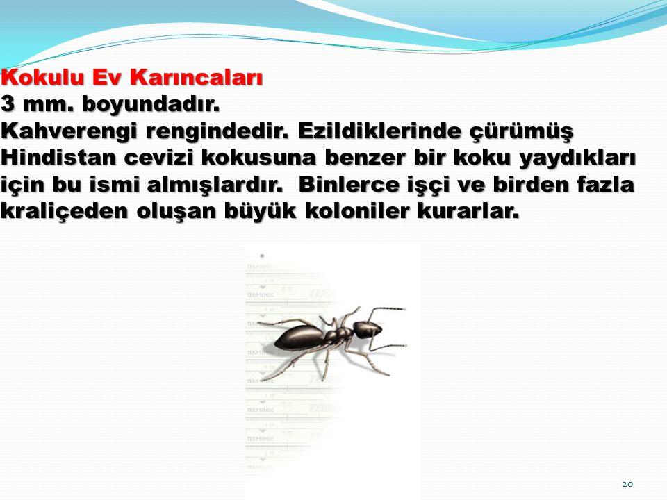 Kokulu Ev Karıncaları 3 mm. boyundadır. Kahverengi rengindedir. Ezildiklerinde çürümüş Hindistan cevizi kokusuna benzer bir koku yaydıkları için bu is