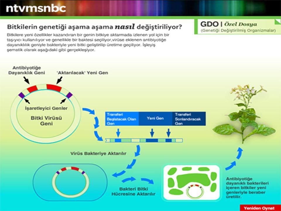 GDO NEDİR Bir canlıdaki genetik özelliklerin kopyalanarak, bu özellikleri taşımayan bir canlıya aktarılması sonucunda üretilen yeni canlıya, Genetiği Değiştirilmiş Organizma (GDO) denir.