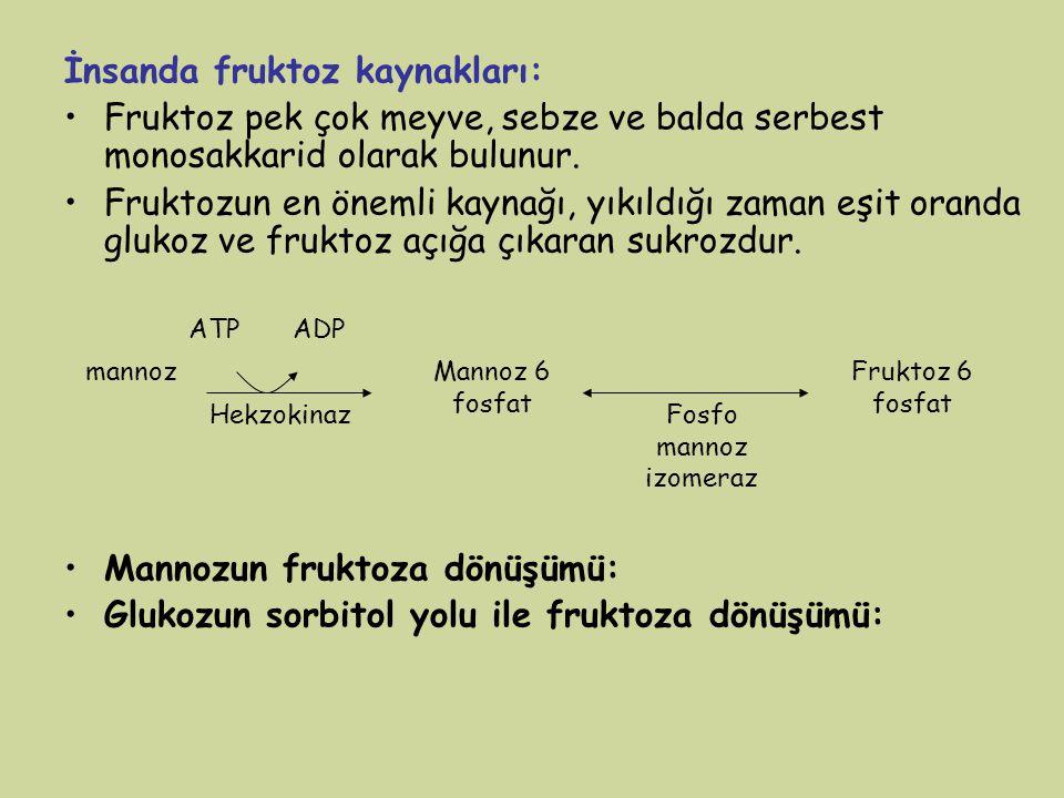 İnsanda fruktoz kaynakları: Fruktoz pek çok meyve, sebze ve balda serbest monosakkarid olarak bulunur. Fruktozun en önemli kaynağı, yıkıldığı zaman eş