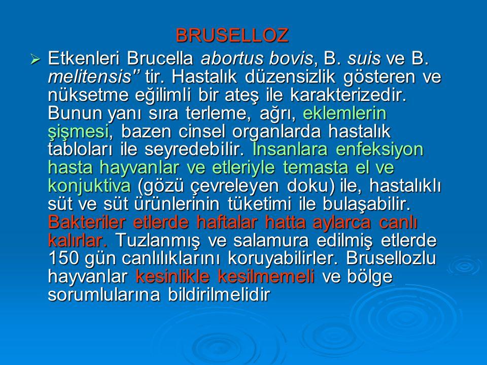 BRUSELLOZ  Etkenleri Brucella abortus bovis, B.suis ve B.