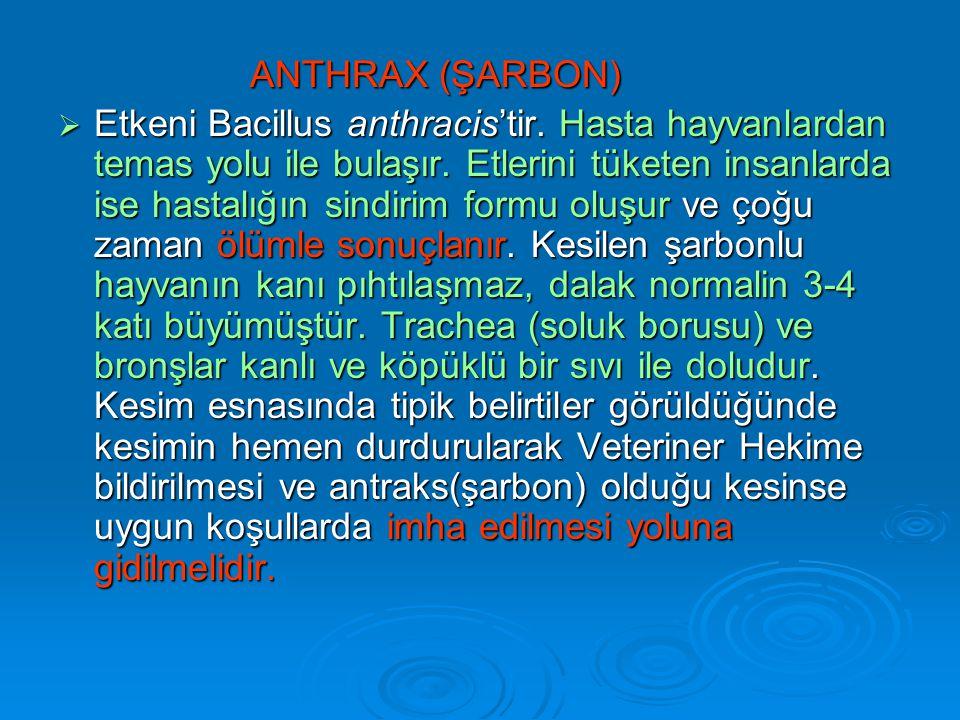 ANTHRAX (ŞARBON)  Etkeni Bacillus anthracis'tir.Hasta hayvanlardan temas yolu ile bulaşır.