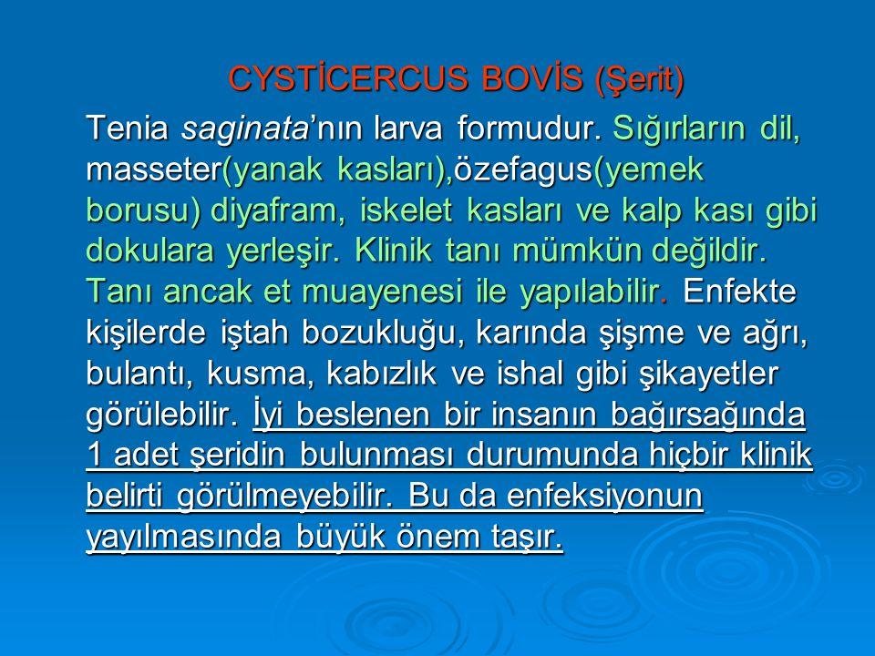 CYSTİCERCUS BOVİS (Şerit) Tenia saginata'nın larva formudur.