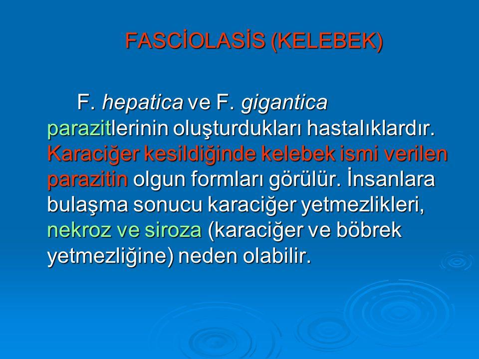 FASCİOLASİS (KELEBEK) F.hepatica ve F. gigantica parazitlerinin oluşturdukları hastalıklardır.