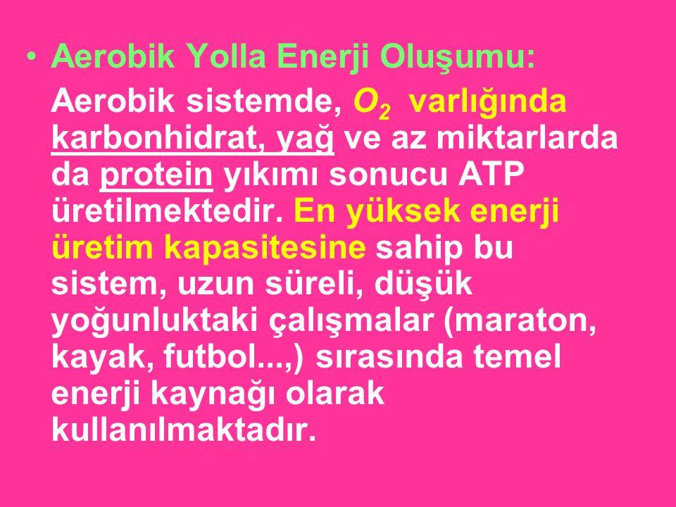 Aerobik Yolla Enerji Oluşumu: Aerobik sistemde, O 2 varlığında karbonhidrat, yağ ve az miktarlarda da protein yıkımı sonucu ATP üretilmektedir. En yük