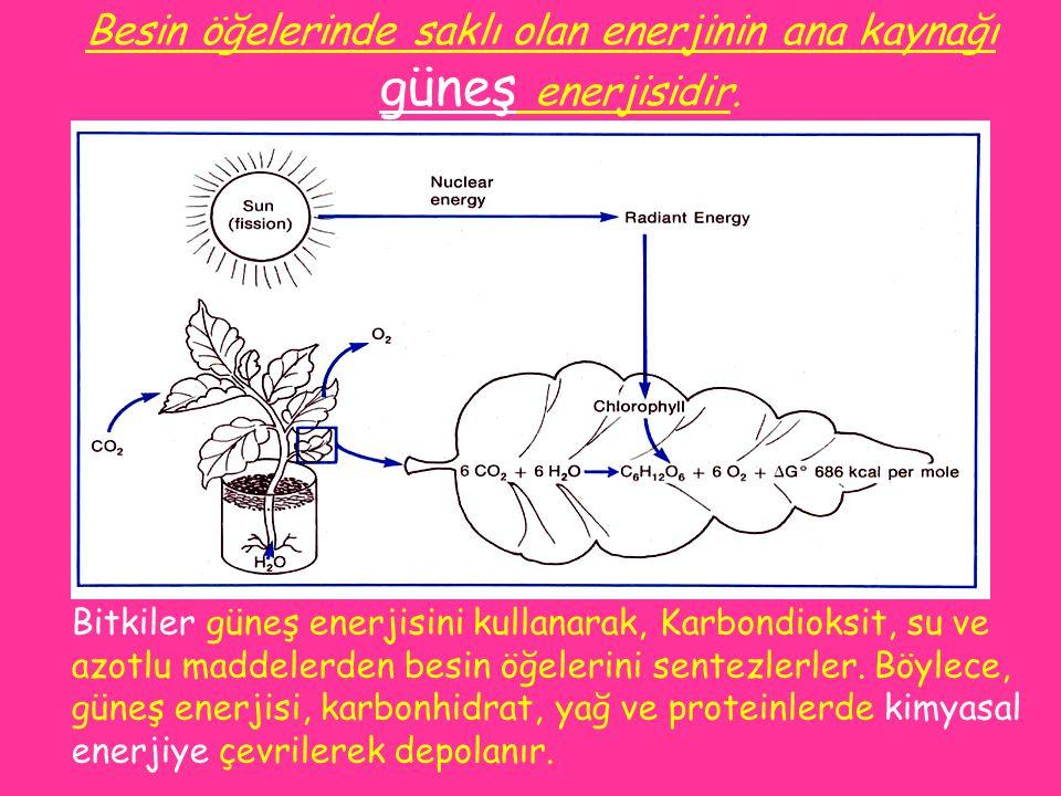 Besin öğelerinde saklı olan enerjinin ana kaynağı güneş enerjisidir. Bitkiler güneş enerjisini kullanarak, Karbondioksit, su ve azotlu maddelerden bes