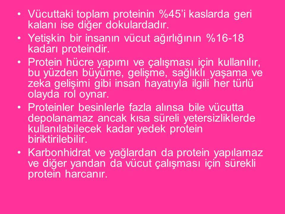 Vücuttaki toplam proteinin %45'i kaslarda geri kalanı ise diğer dokulardadır. Yetişkin bir insanın vücut ağırlığının %16-18 kadarı proteindir. Protein