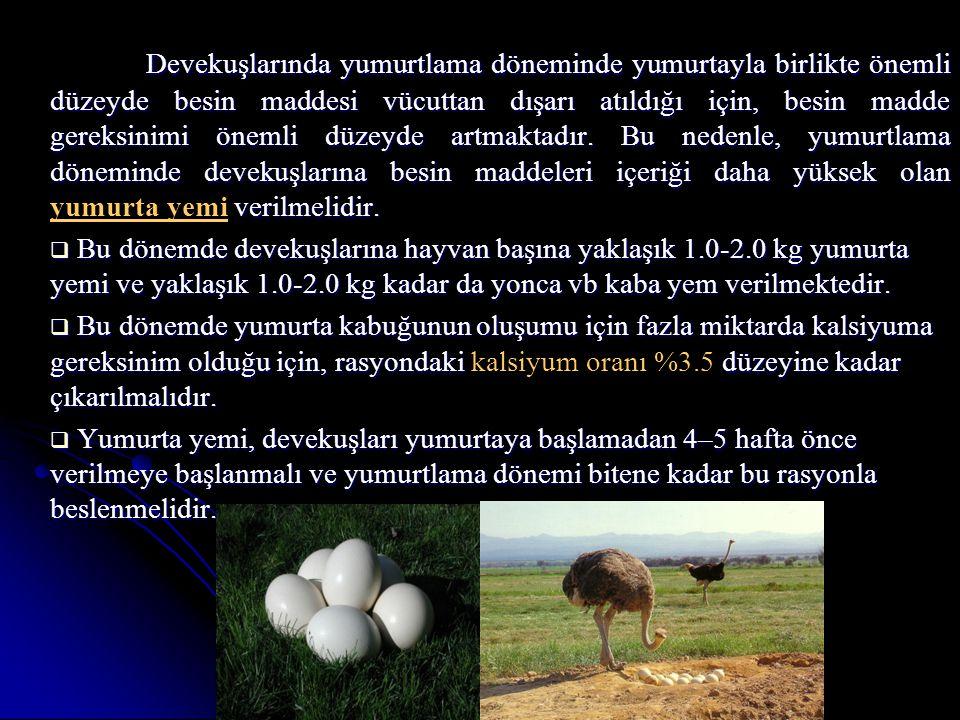 Devekuşlarında yumurtlama döneminde yumurtayla birlikte önemli düzeyde besin maddesi vücuttan dışarı atıldığı için, besin madde gereksinimi önemli düz