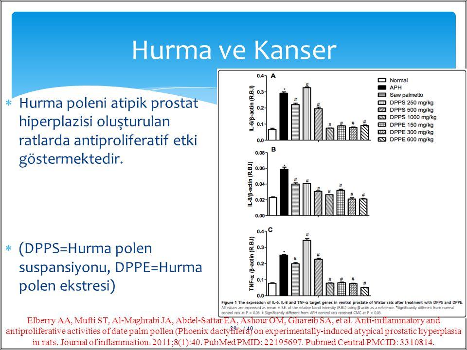  Hurma poleni atipik prostat hiperplazisi oluşturulan ratlarda antiproliferatif etki göstermektedir.  (DPPS=Hurma polen suspansiyonu, DPPE=Hurma pol
