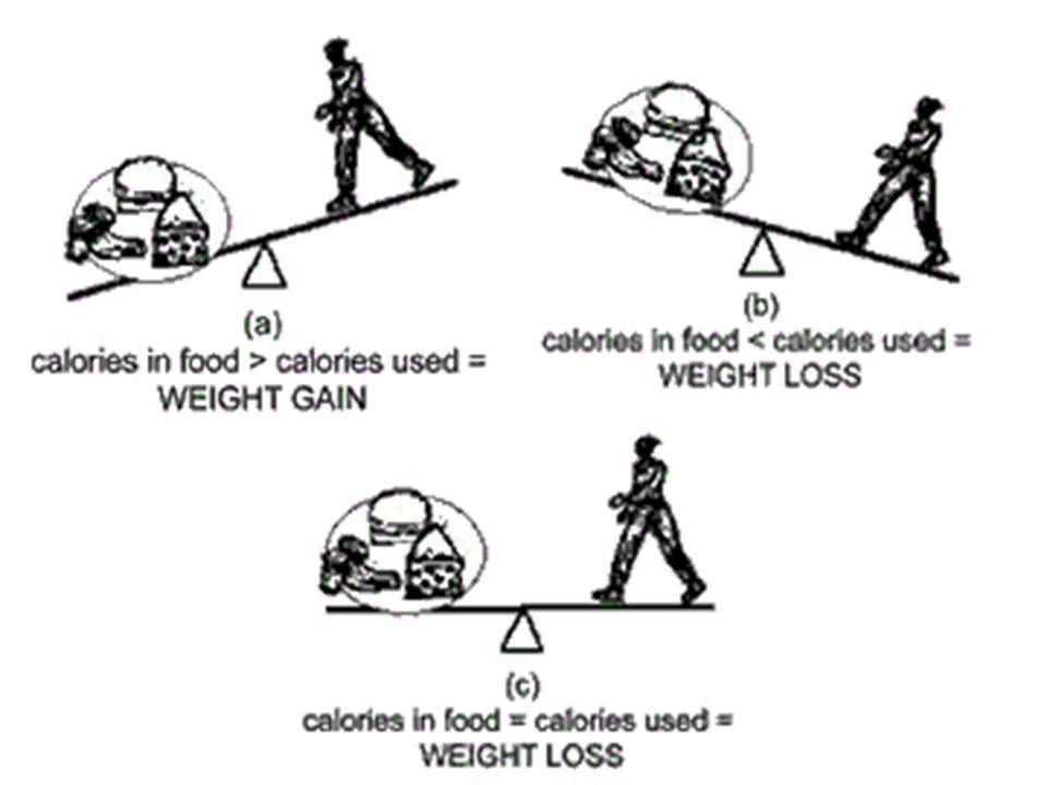 + Besin Haraket ve Bazal Metabolizma Hızı Isı ENERJİ DENGESİ