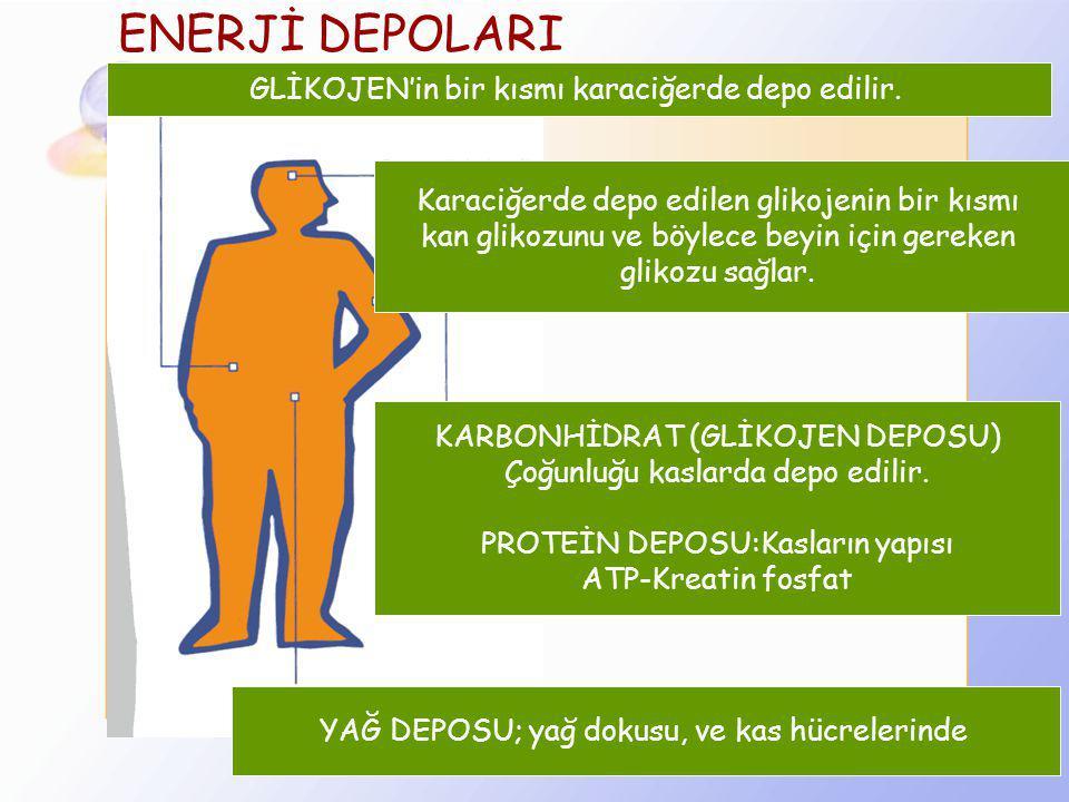 Enerji nasıl elde edilir? 1. Aerobik Metabolizma : Düşük şiddetteki egzersizler süresince enerji üretimi bu yolla olur.( 7 dak. ve üstündeki egzersizl
