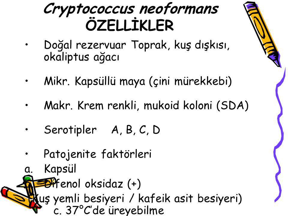Cryptococcus neoformans ÖZELLİKLER Doğal rezervuar Toprak, kuş dışkısı, okaliptus ağacı Mikr. Kapsüllü maya (çini mürekkebi) Makr. Krem renkli, mukoid