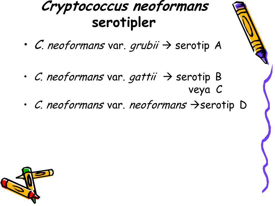 Cryptococcus neoformans serotipler C. neoformans var. grubii  serotip A C. neoformans var. gattii  serotip B veya C C. neoformans var. neoformans 