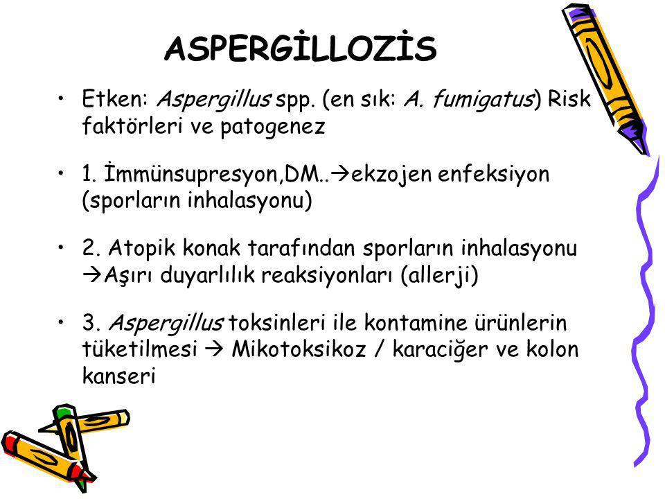 ASPERGİLLOZİS Etken: Aspergillus spp. (en sık: A. fumigatus) Risk faktörleri ve patogenez 1. İmmünsupresyon,DM..  ekzojen enfeksiyon (sporların inhal