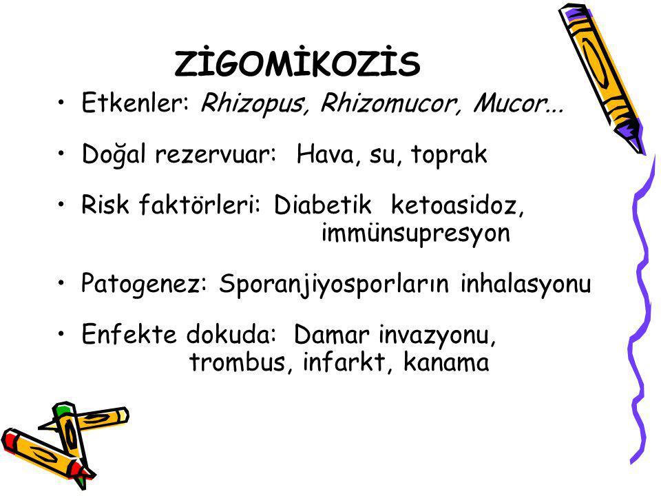 ZİGOMİKOZİS Etkenler: Rhizopus, Rhizomucor, Mucor... Doğal rezervuar: Hava, su, toprak Risk faktörleri: Diabetik ketoasidoz, immünsupresyon Patogenez: