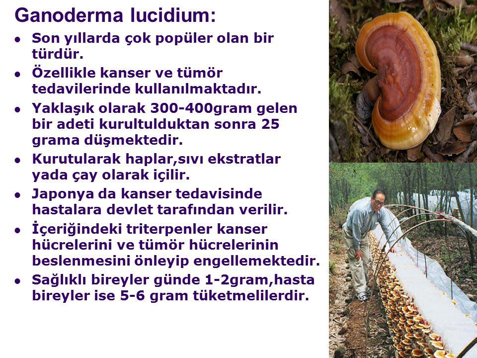 Ganoderma lucidium: Son yıllarda çok popüler olan bir türdür.