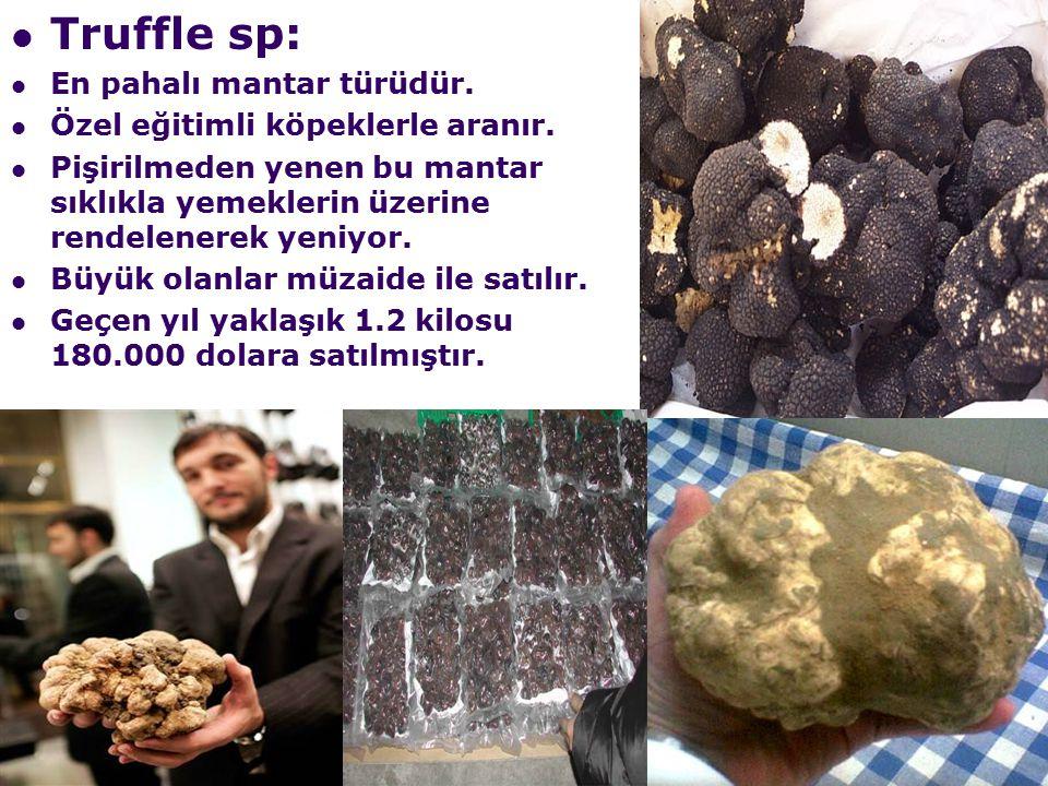 Truffle sp: En pahalı mantar türüdür.Özel eğitimli köpeklerle aranır.