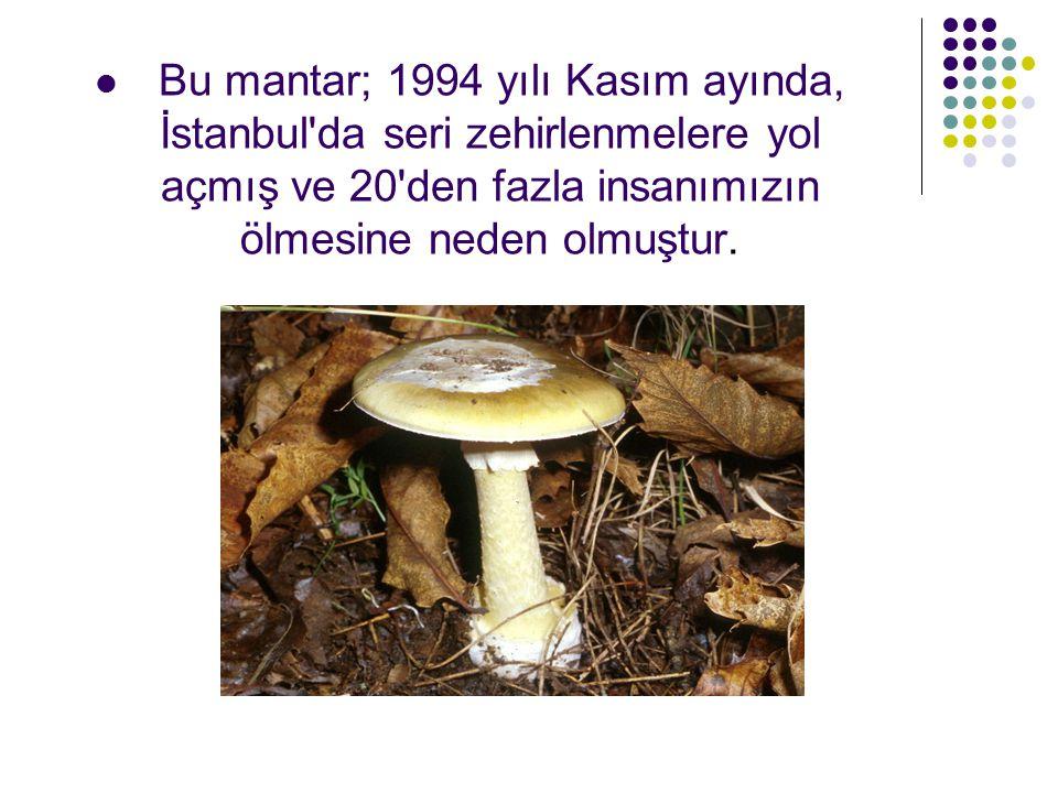 Bu mantar; 1994 yılı Kasım ayında, İstanbul da seri zehirlenmelere yol açmış ve 20 den fazla insanımızın ölmesine neden olmuştur.