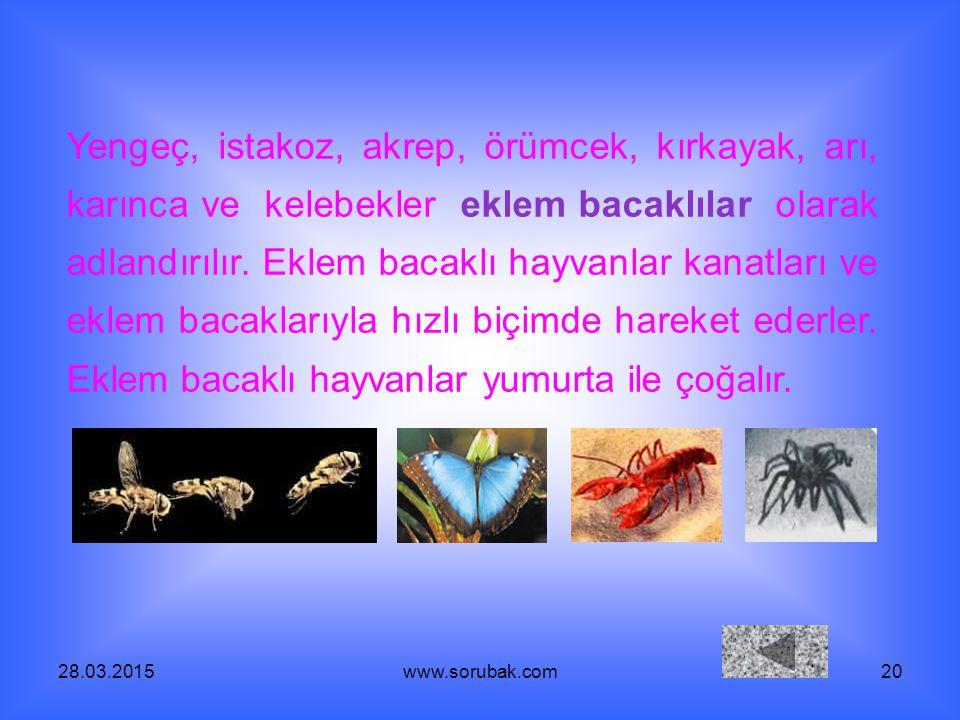 28.03.2015www.sorubak.com20 Yengeç, istakoz, akrep, örümcek, kırkayak, arı, karınca ve kelebekler eklem bacaklılar olarak adlandırılır. Eklem bacaklı