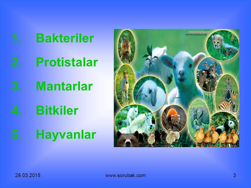 28.03.2015www.sorubak.com3 1. Bakteriler 2. Protistalar 3. Mantarlar 4. Bitkiler 5. Hayvanlar