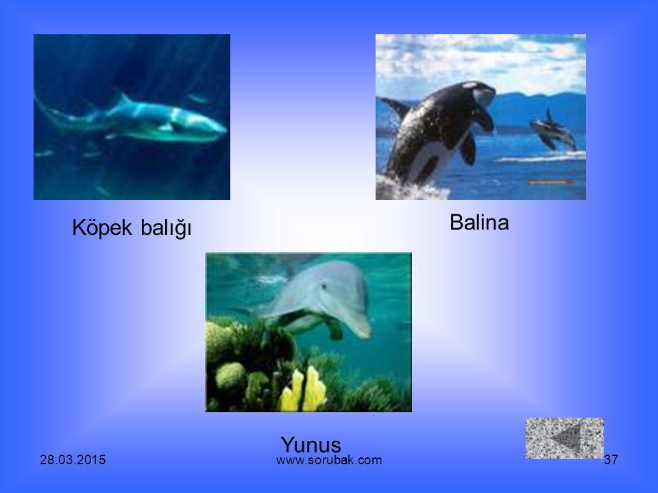 28.03.2015www.sorubak.com37 Köpek balığı Balina Yunus