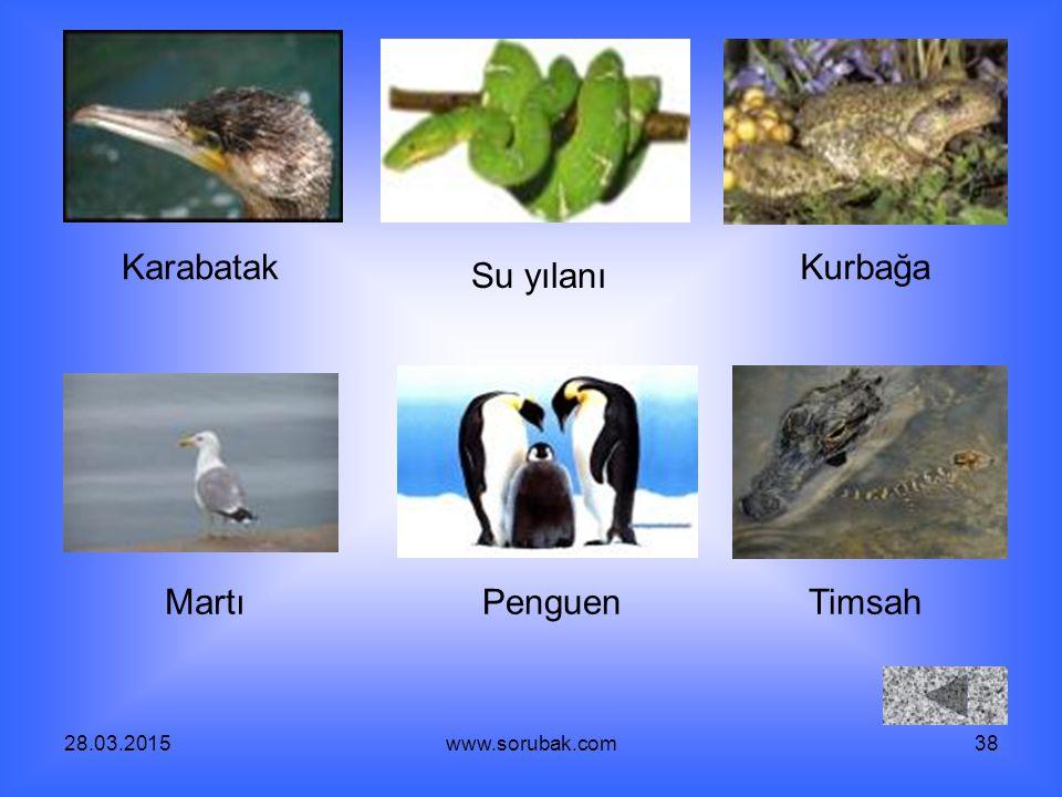 28.03.2015www.sorubak.com38 Karabatak Su yılanı Kurbağa MartıPenguenTimsah