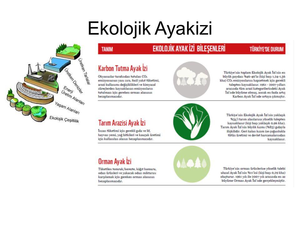 Ekolojik Ayakizi