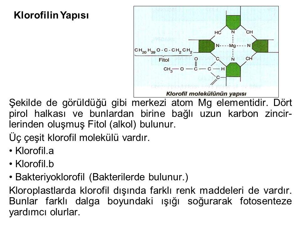 Şekilde de görüldüğü gibi merkezi atom Mg elementidir. Dört pirol halkası ve bunlardan birine bağlı uzun karbon zincir- lerinden oluşmuş Fitol (alkol)