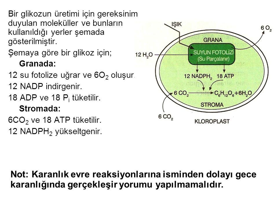 Bir glikozun üretimi için gereksinim duyulan moleküller ve bunların kullanıldığı yerler şemada gösterilmiştir. Şemaya göre bir glikoz için; Granada: 1