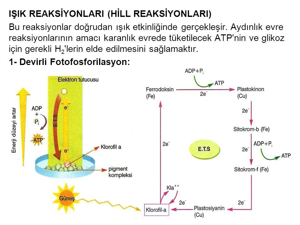 IŞIK REAKSİYONLARI (HİLL REAKSİYONLARI) Bu reaksiyonlar doğrudan ışık etkinliğinde gerçekleşir. Aydınlık evre reaksiyonlarının amacı karanlık evrede t